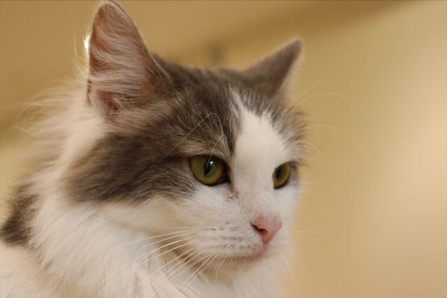 見つめる猫さん