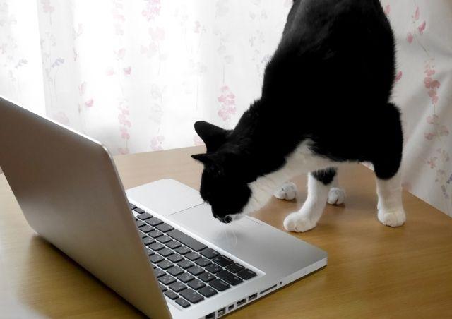 パソコンの匂いをかぐ猫