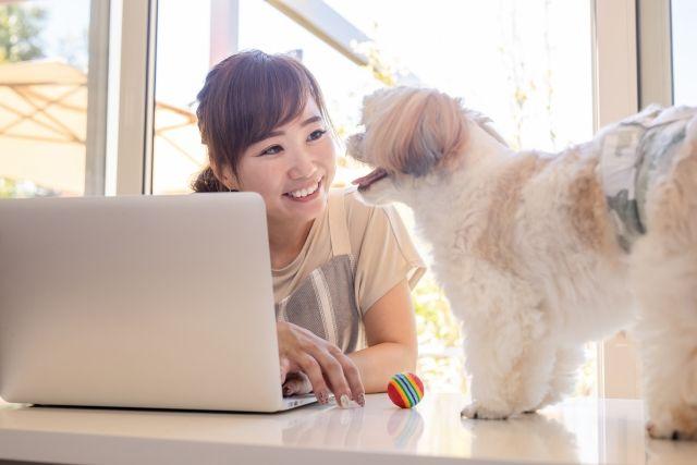 犬と一緒にノートパソコンを使う女性