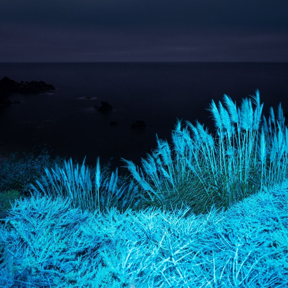 Big Sur Night Grasses