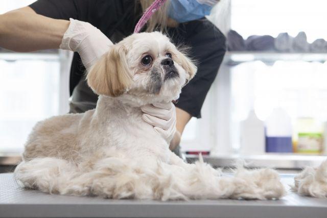 Dog trimming